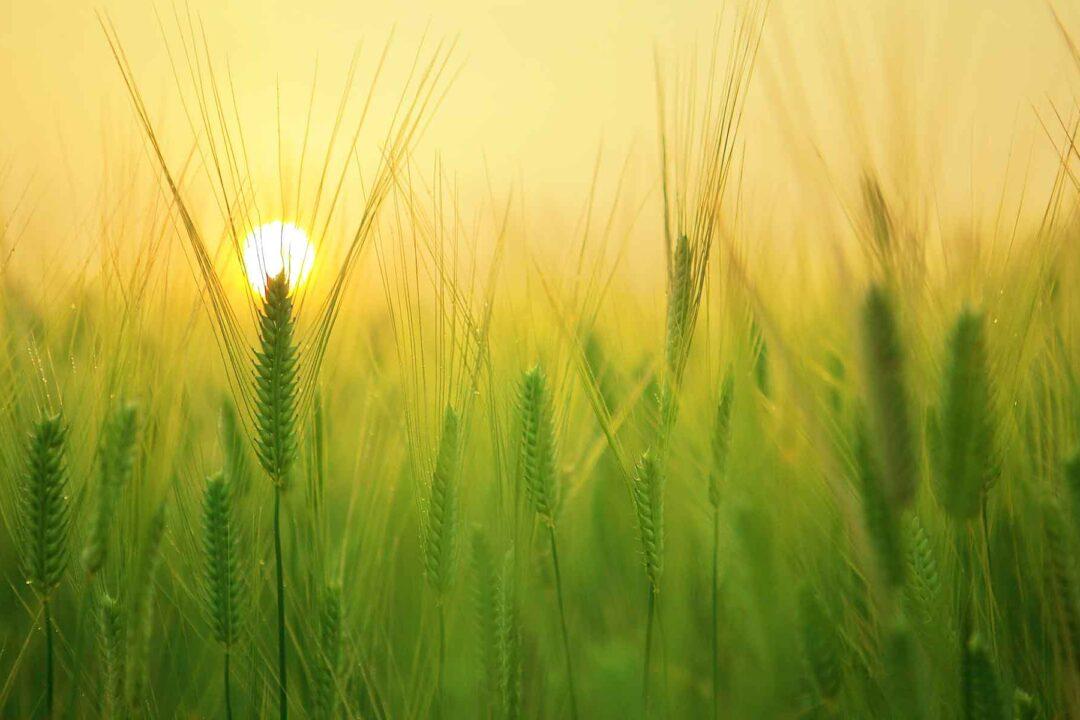 https://cieu.in/wp-content/uploads/2021/02/CIEU-agriculture-aow-1080x720.jpg