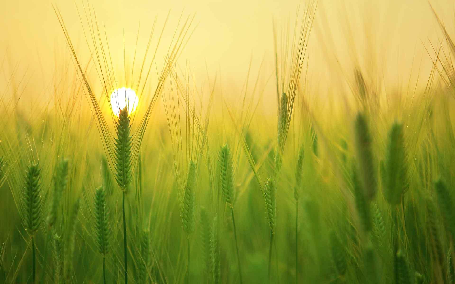 CIEU-agriculture-aow